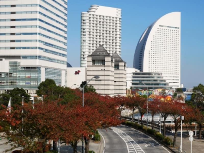 みなとみらい21地区には紅葉する街路樹が多くあります。「さくら通り」は例年11月中旬に見ごろを迎えます(2016年11月18日撮影)