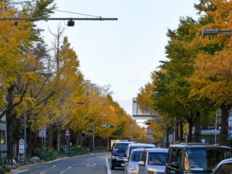 開港広場側から見た山下公園通り(2018年12月4日撮影)
