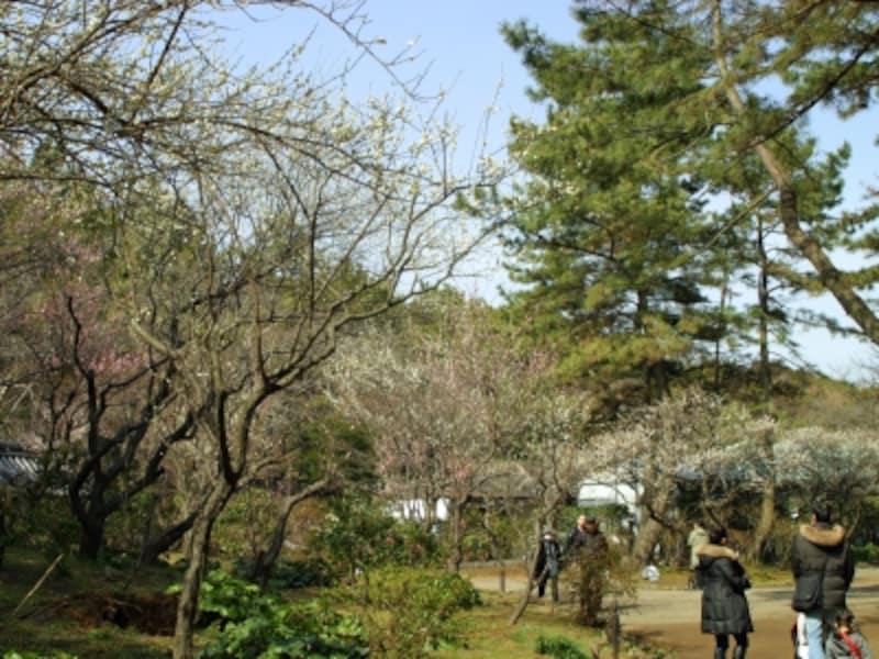 紅梅・白梅などが順々に咲き、いつ足を運んでも見られます