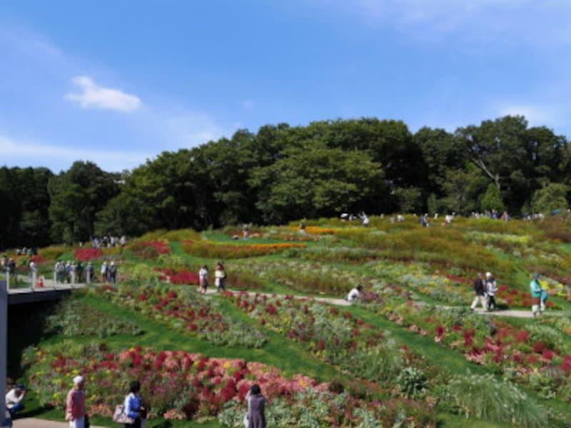 2017年秋の里山ガーデンの様子(2017年10月18日撮影)