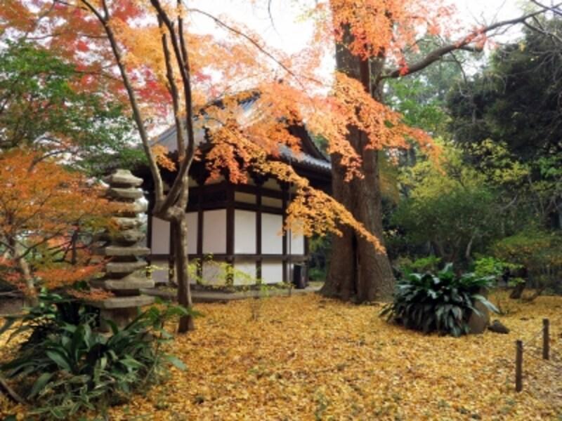 イチョウに覆われる旧天瑞寺寿塔覆堂も内苑にあります(2015年12月10日撮影)