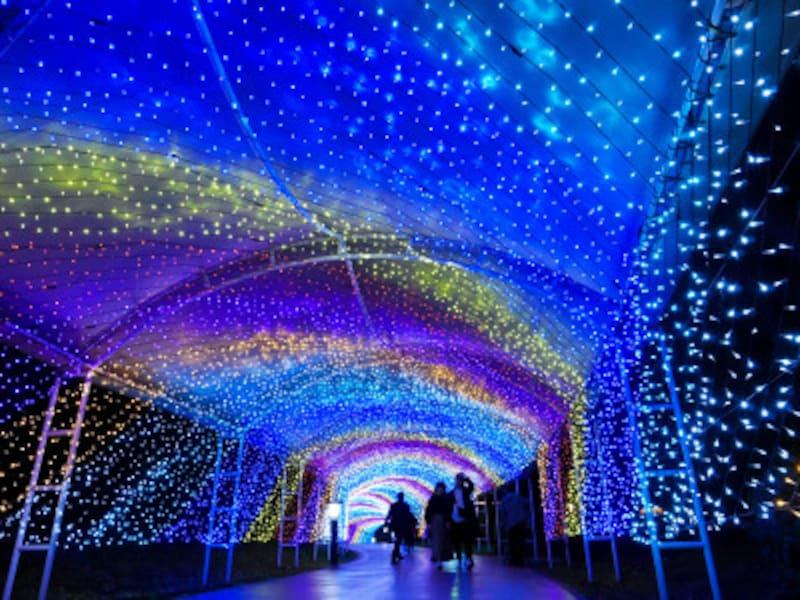 全長約100メートルのイルミネーションが続く光のトンネル「グリッター・シェルロード」(2018年11月8日撮影)