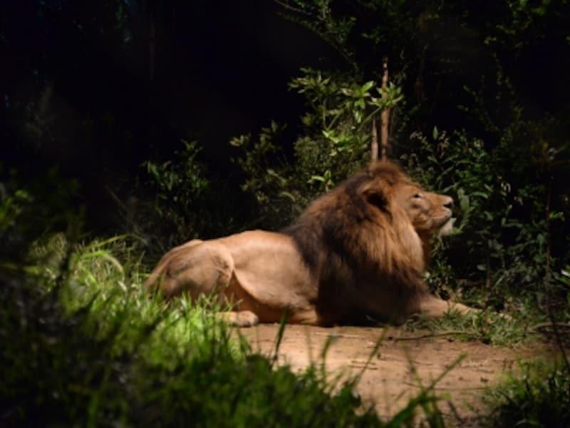夜の動物たちの姿を観察することができる「ナイトズーラシア」(画像提供:ズーラシア)