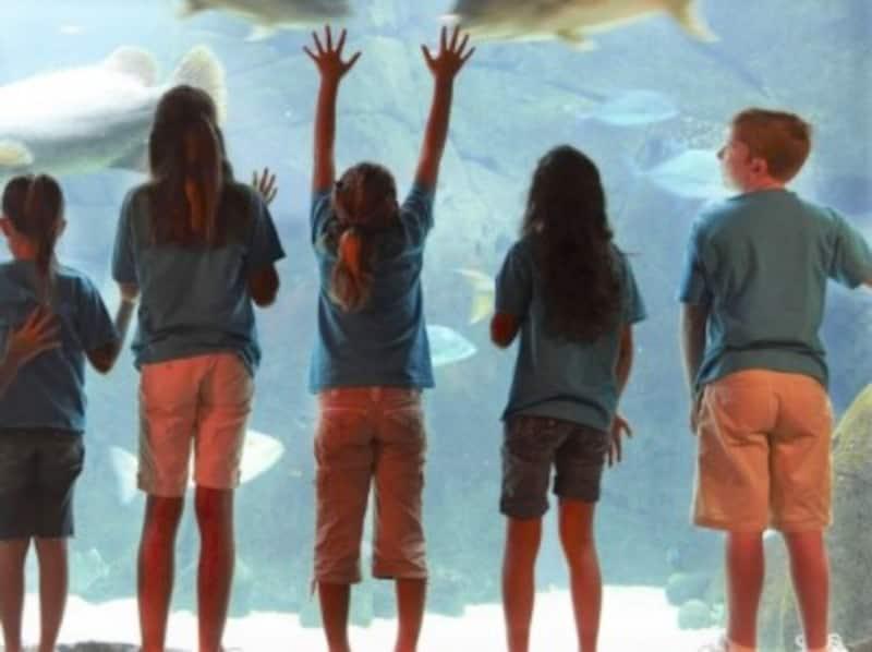 ヒルトン・ハワイアン・ビレッジのキッズプログラム「キッズ・ペンギン」。水族館や博物館への遠足もある