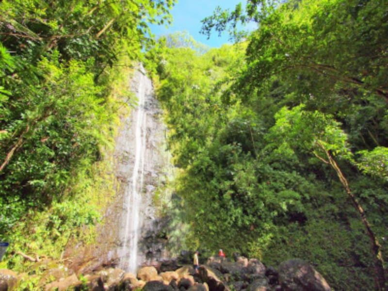 マノアの滝を目指して、うっそうと生い茂る樹木の中を歩くマノア・フォールズ・トレイ