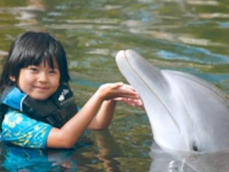 親子でワクワクのイルカ体験を。宿泊者以外でも参加可能