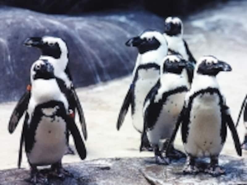 子どもたちも大喜び!ヒルトンのマスコット、ケープペンギン