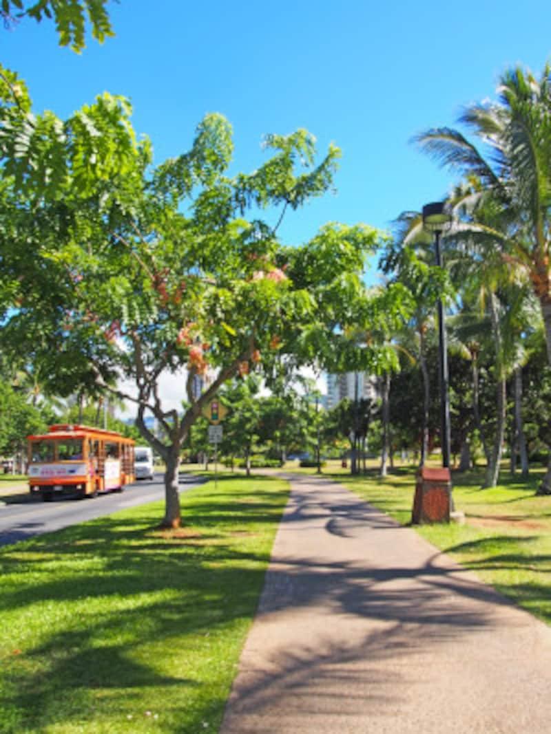 9月のハワイ。ハワイの夏の花、シャワーツリーのシーズンもそろそろ終わり