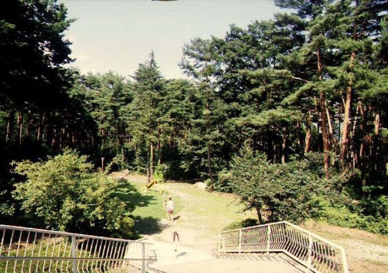 駒ヶ岳SAの自然遊歩道