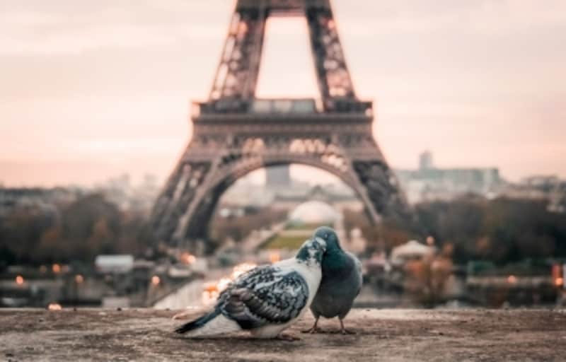 フランスならではのおすすめお土産を紹介