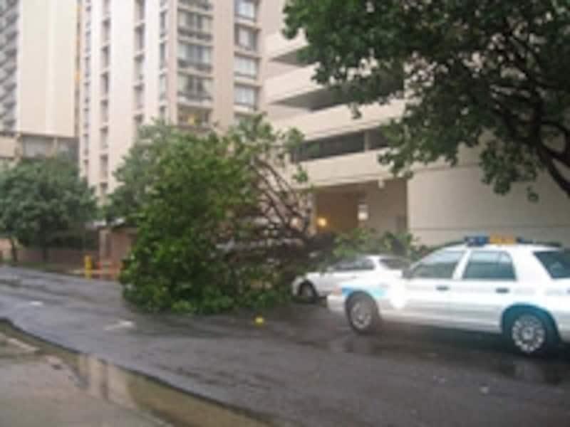 悪天候で倒壊したワイキキの街路樹