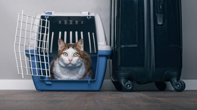 獣医師おすすめ!猫のキャリーバッグの選び方・嫌がる時の対処法