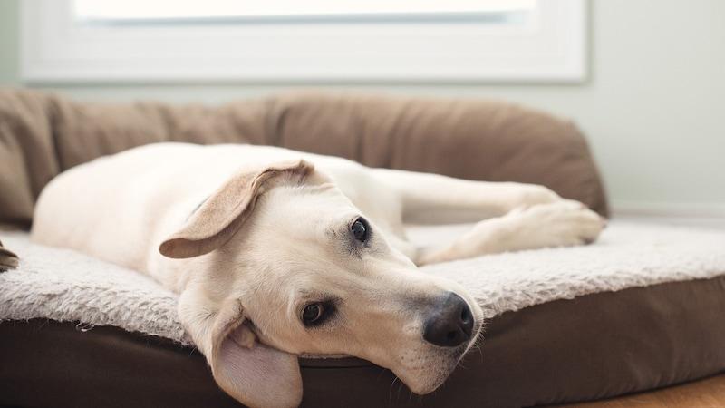 高齢犬の介護用マットおすすめ9選|高反発と低反発を比較!床ずれ防止に人気の商品をご紹介