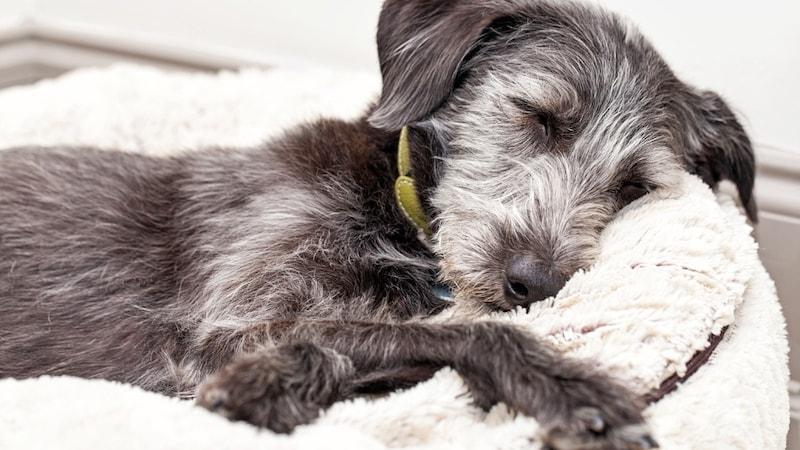 犬の床ずれ防止グッズおすすめ7選と床ずれ対処法