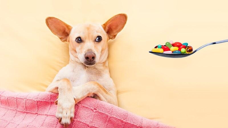 老犬に薬を飲ませる方法とおすすめのサポートグッズ3選