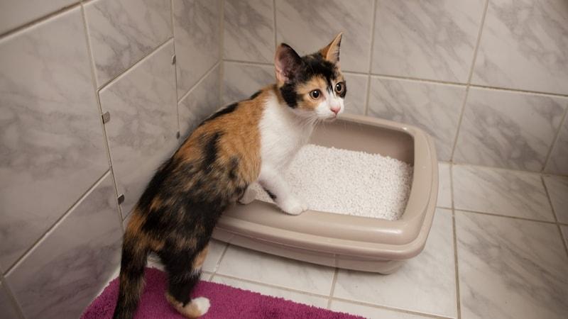 猫用システムトイレ&グッズおすすめ人気商品15選|砂とシートで臭いを抑える!おしゃれな製品も