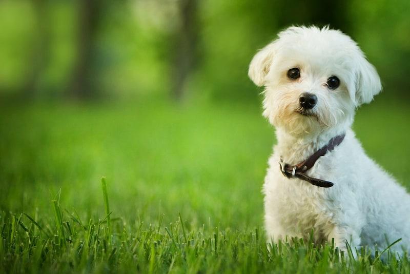 子犬の首輪おすすめ人気ランキング12選|初めての首輪はサイズ調節しやすいものが◎