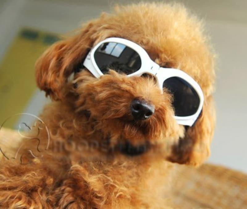 gooMart,小型犬用おしゃれサングラス