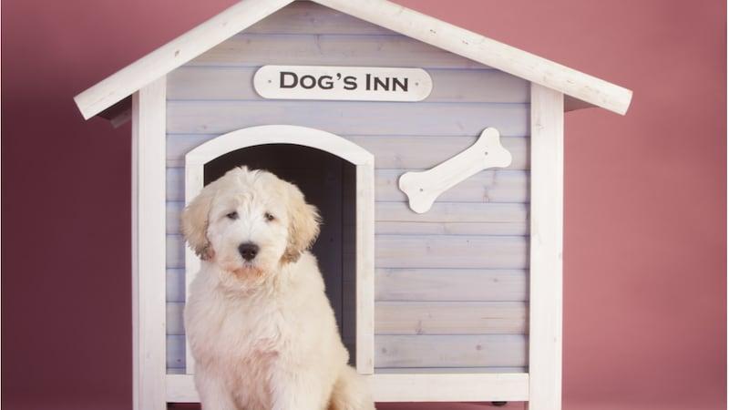 室内用・屋外用の犬小屋おすすめ16選 大型犬でも快適!おしゃれでかわいい木製も