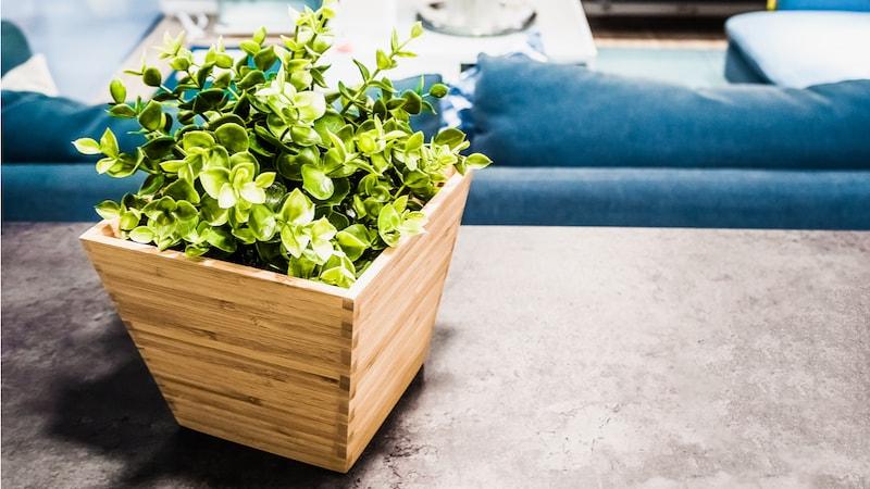光触媒観葉植物のおすすめ人気ランキング10選|様々な効果に注目!空気清浄にも