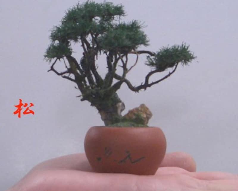 やすら樹,手造りミニ盆栽 松(丸鉢),-