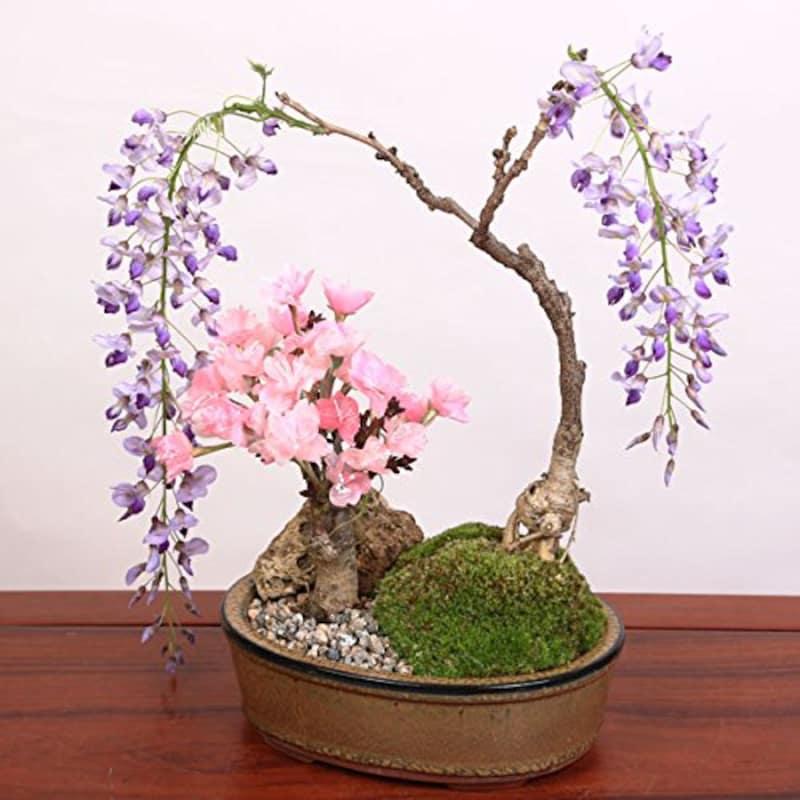 遊恵盆栽,桜・藤寄せ植え,y2783