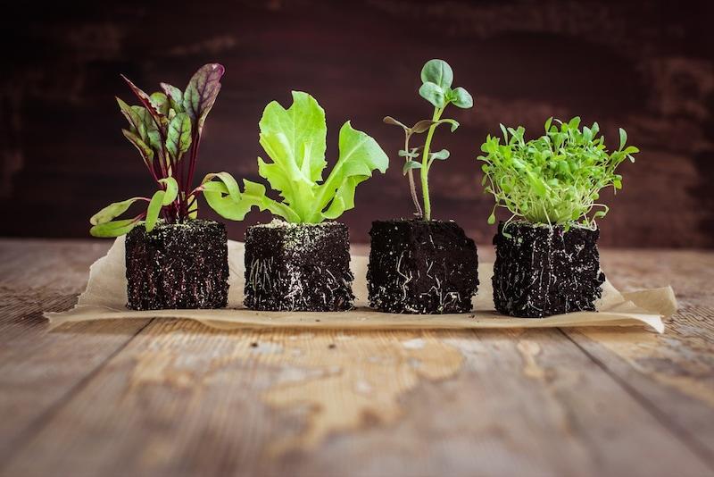 栽培キットのおすすめ人気ランキング9選|小型サイズは観賞用に最適