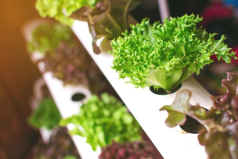 水耕栽培キットのおすすめ人気ランキング15選|自作のオリジナル空間で野菜を育てよう