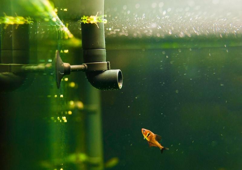 水槽用ポンプおすすめ人気ランキング10選 静音で快適な商品はこれ!
