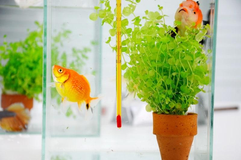 水温計おすすめ人気ランキング10選|取り付け簡単なタイプは?適温で魚も快適に