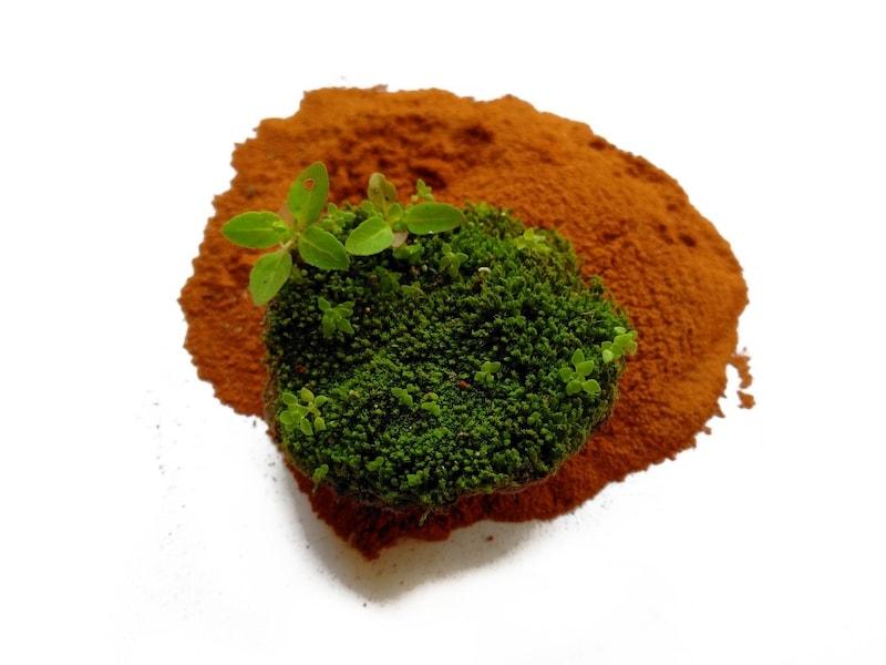 苔栽培のおすすめ人気ランキング8選|種類に合わせて最適なアレンジを
