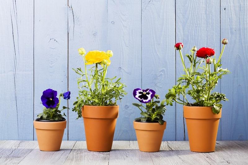 植木鉢のおすすめ人気ランキング10選|プラスチック鉢はハンギングにも最適