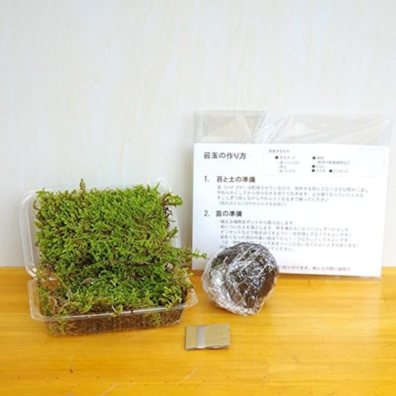 みどり屋 和草,和草 さあ苔玉を作りましょう,PIN128