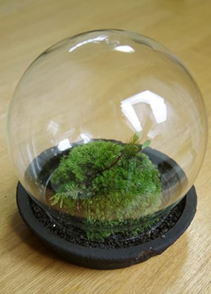 みどり屋 和草,小さな苔の世界,PIN1058