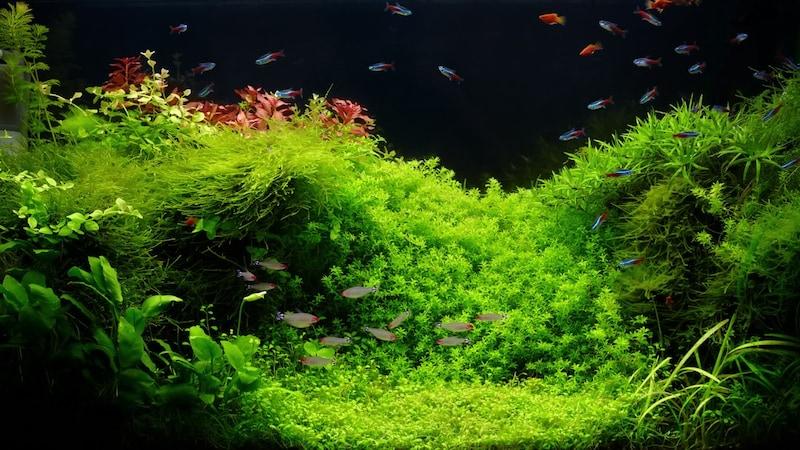水草おすすめ人気ランキング10選|種類別に解説!育てやすい初心者向けのタイプは?