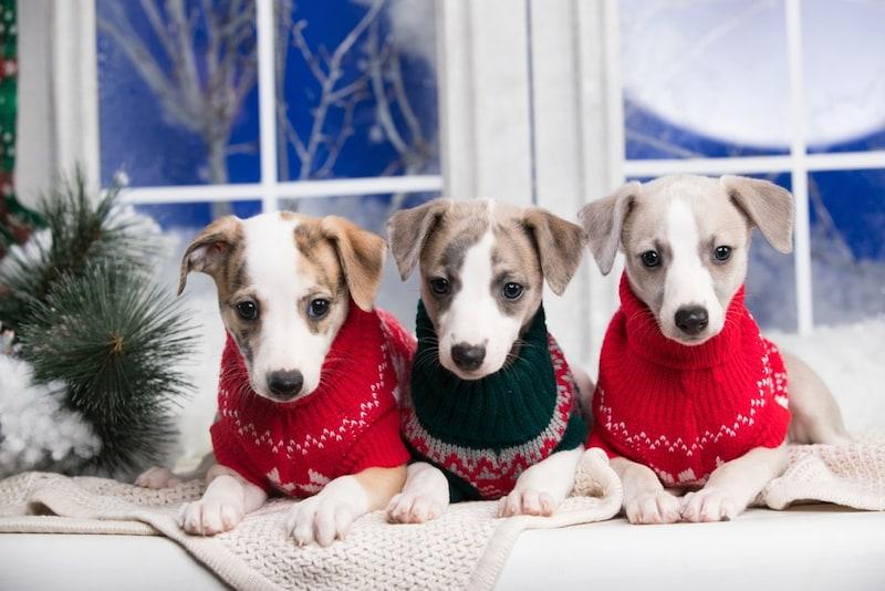 犬用冬服おすすめ人気ランキング20選|おしゃれなつなぎや暖かいコートも
