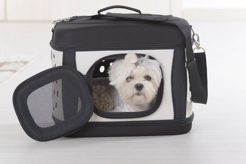 犬用キャリーバッグおすすめ人気ランキング10選|電車移動もラクちん