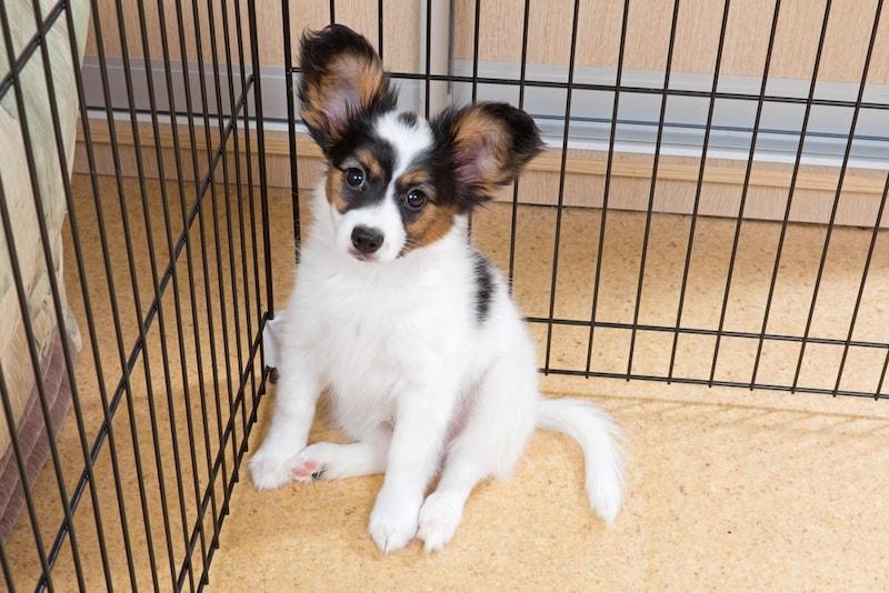 小型犬ケージおすすめ商品14選 おしゃれな木製のものから持ち運びに便利なものまでご紹介!