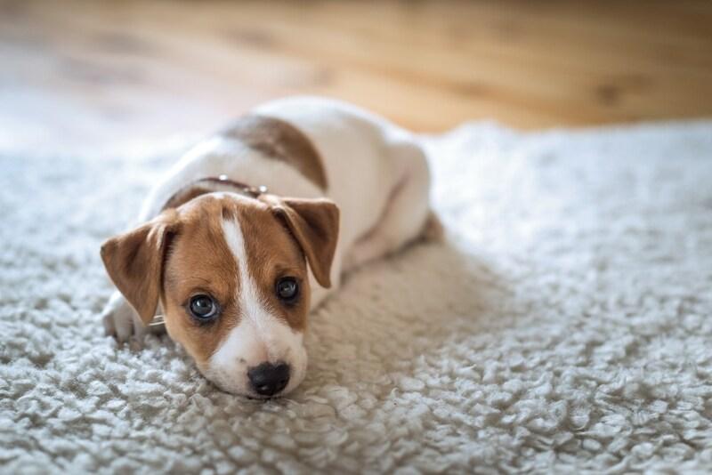 犬用ホットカーペットおすすめランキング11選|温かい温度をキープしてくれる冬の必需品!