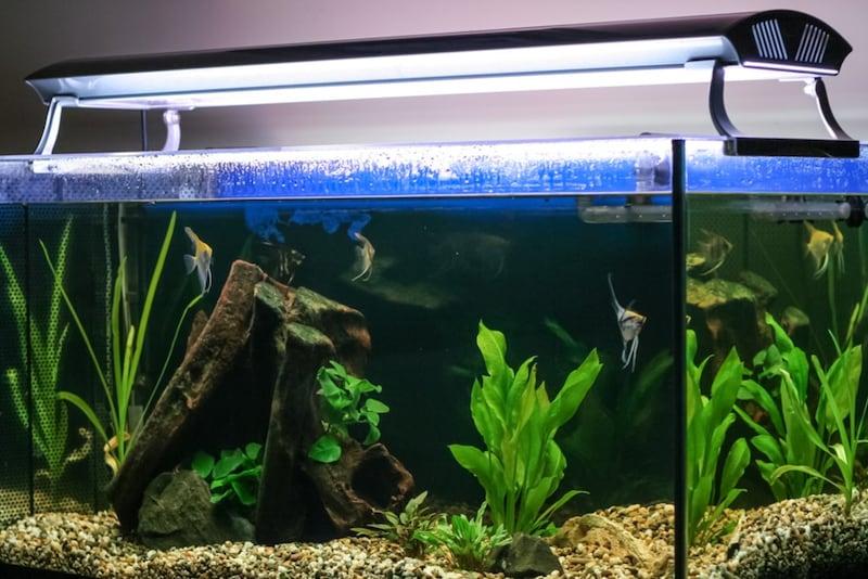 水槽用ライトおすすめランキング20選|LEDは長寿命?電気代は安い?小型モデルも紹介!