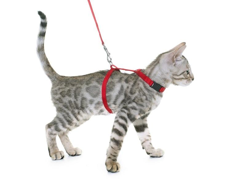 猫用ハーネスのおすすめ人気ランキング10選|外れないものは?