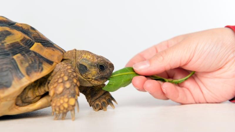 亀の餌おすすめ人気ランキング9選|臭いを抑えるタイプも登場
