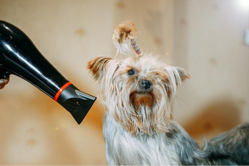 犬用ドライヤーおすすめ人気ランキング10選|スタンドタイプや温度調節機能付きも!