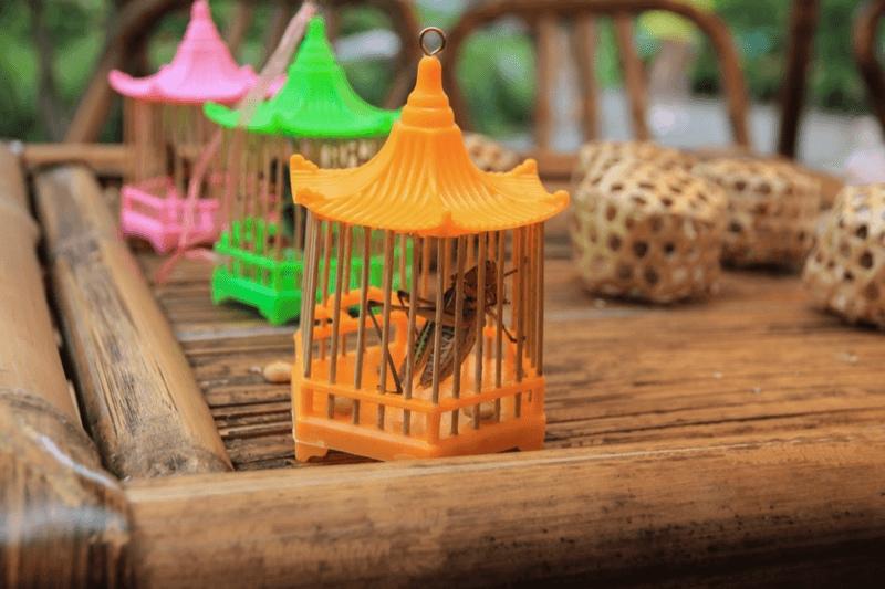 昆虫 飼育ケースおすすめ人気ランキング10選 楽しく育てよう