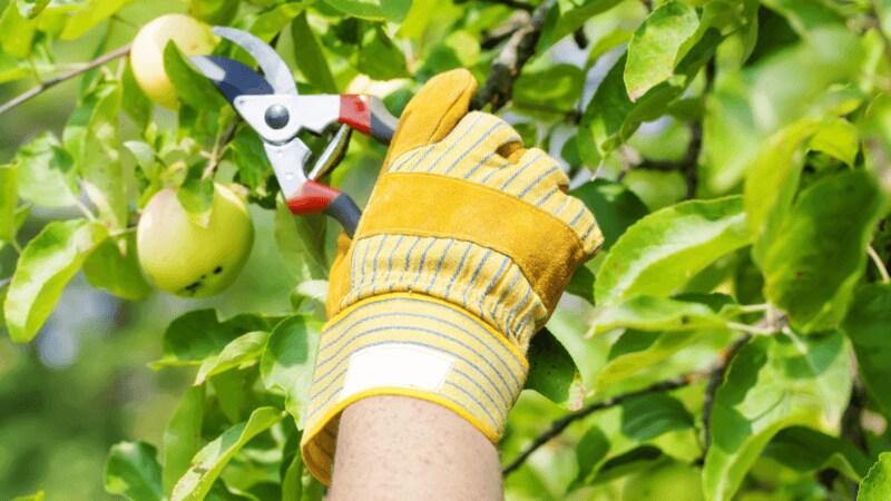園芸用はさみのおすすめ人気ランキング10選|いいものは何年でも使い込むことができる!