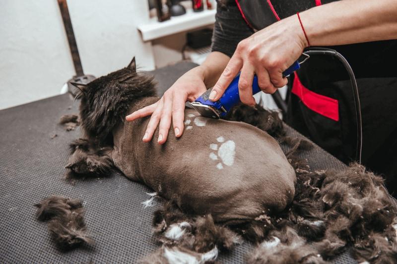 猫用バリカンおすすめ人気ランキング9選|部分刈りは刃幅3cm以下が◎