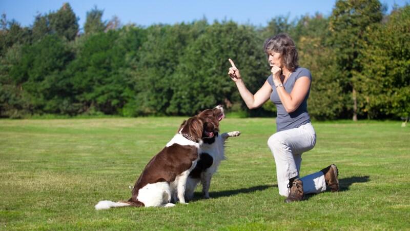 犬笛おすすめランキング12選|音の調節がしやすい商品が便利!使い方や効果も解説