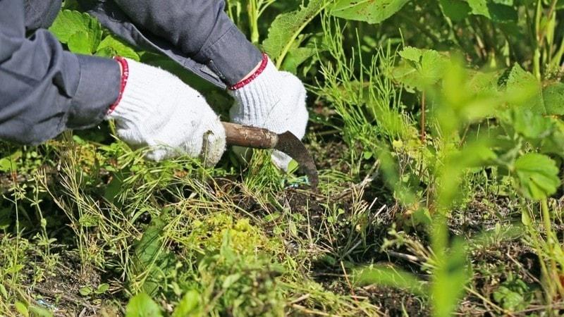 草刈り鎌のおすすめ人気ランキング11選|草の種類・特徴に適したものを