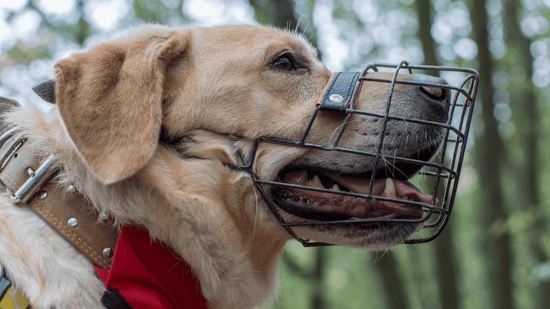 犬用口輪おすすめ人気ランキング10選|可愛いアヒル口タイプが人気!付け方や効果もチェック