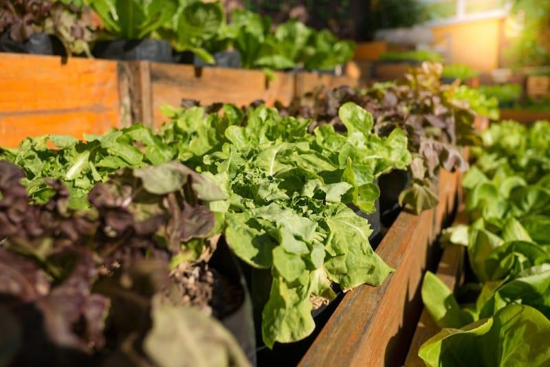 家庭菜園プランターのおすすめ人気ランキング9選|深さと土の入る容量をチェック!